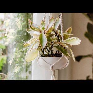 Alter Plant hanger